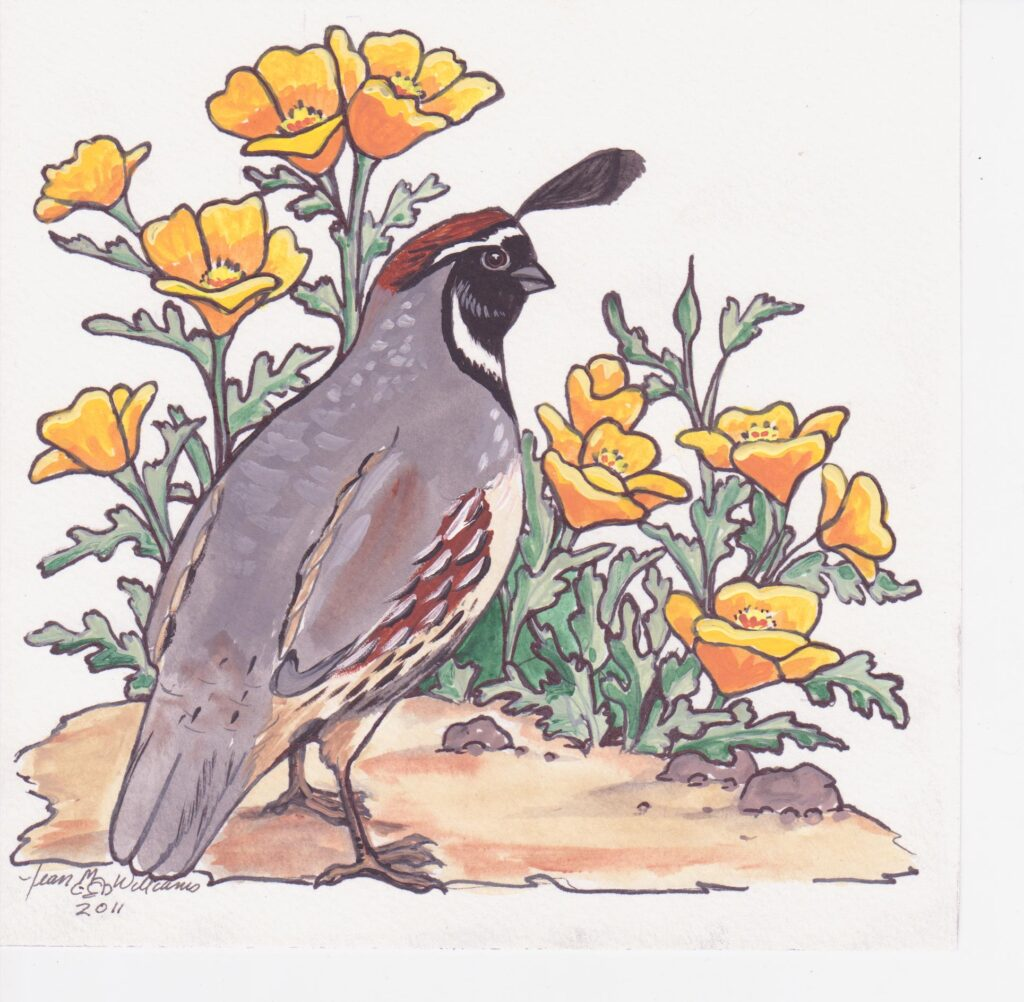 tuzi williams, quail, poppies