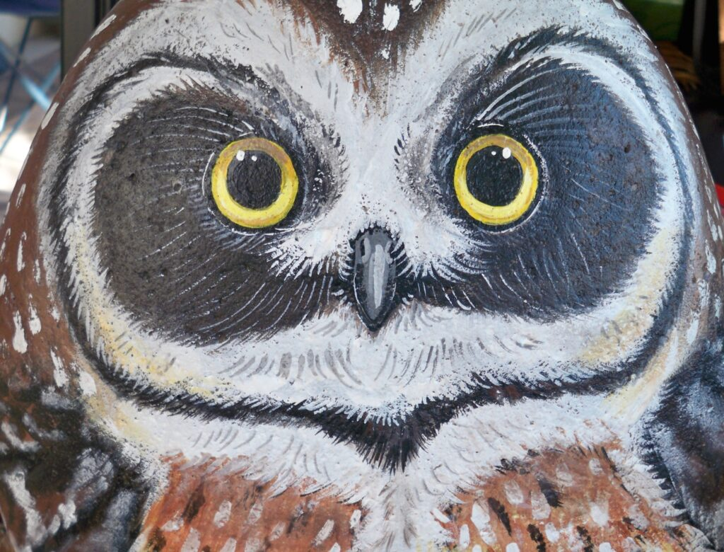tuzi williams, owl, painted stone