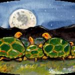 turtle tortoise moon green baby