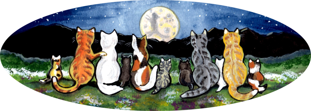 cat kitten tabby calico night moon