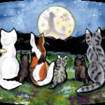 cat kitten tabby calico night moon