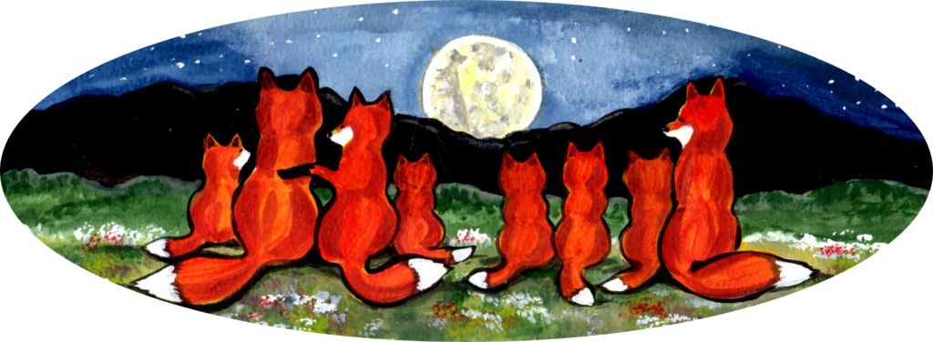 red fox foxes family night moon