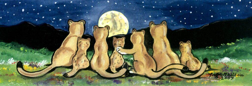 puma cougar mountain+lion night moon